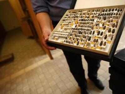 Scientist showing a drawer with insects from the dry collection.