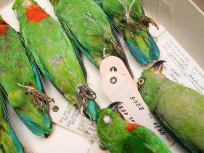 Birds in the vertebrate collection