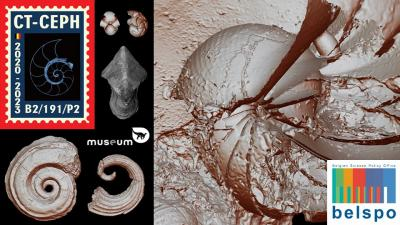 CT-CEPH - A fresh look at Devonian, Early Carboniferous and Latest Cretaceous to Paleogene nautilid cephalopods from Belgium
