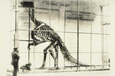 First assembled specimen of 'Iguanodon bernissartensis' in the inner courtyard of the former Nassau Hotel in 1883
