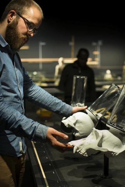 A visitor compares the skull volume of a human, a gorilla and an australopithecine.