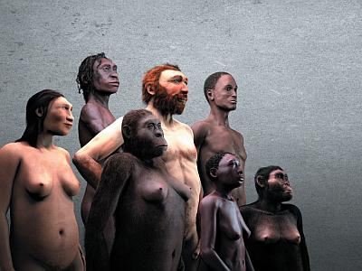 Seven hominids representing the Gallery of Humankind