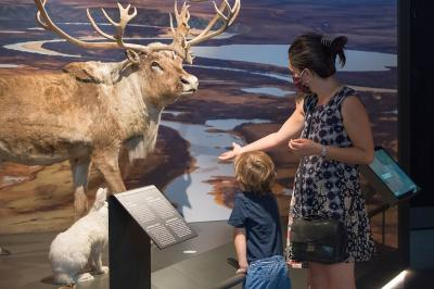 A family observing tundra animals in Living Planet (photo: Thierry Hubin / RBINS)