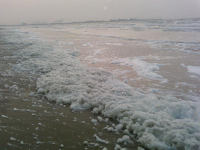 Foam on the beach: a result of eutrophication. (photo: RBINS)