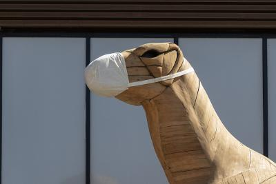 Our wooden Iguanodon, in front of the museum, with its mask (photo: Stéphane Van Israël, RBINS)