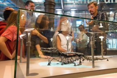 Skeleton of the 125 million years old adult small crocodile Bernissartia fagesii exposed in the Gallery of Dinosaurs. (Photo: RBINS)