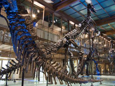 The iconic Iguanodons in our Dinosaur Gallery