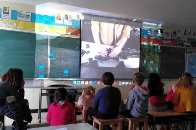 Pupils watch a live online animation by our education team from their classroom (photo: RBINS)