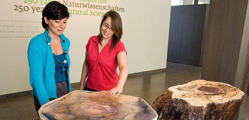 The fossilized tree stump from Hoegaarden in '250 Years of Natural Sciences'
