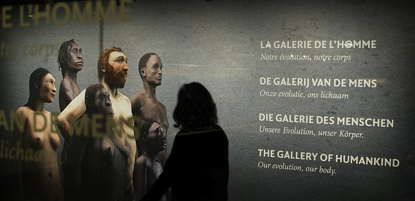 """A visitor admires the """"Gallery of Humankind – Our evolution, our body"""" poster (photo: Koen Broos)"""