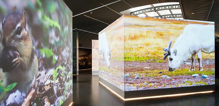 The living environments presented in Living Planet are illustrated by projections on large screens (photo: Thierry Hubin / RBINS)