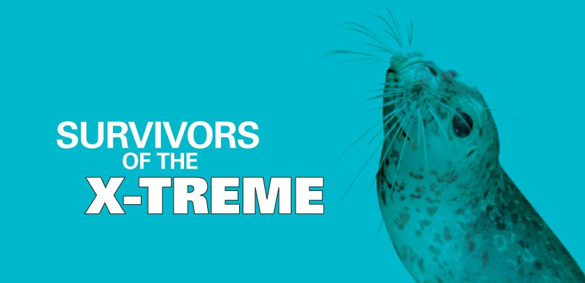 Survivors of the X-TREME: visual with a seal (how does a seal stay warm in the ice-cold water?)