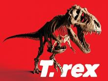 Visual of the exhibition T. rex (Trix skeleton in attack position)