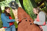 Two friends chasing termites in the exhibition MONKEYS